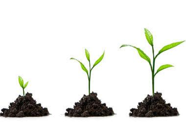 Як підкислити ґрунт сіркою