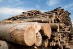 Лесозаготовка и деревообработка