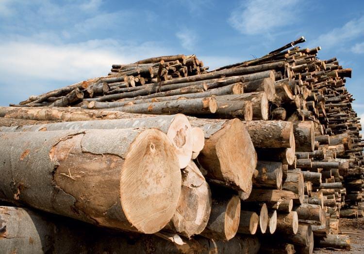 Лісозаготівля та деревообробка