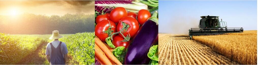 Минеральные Удобрения и Их Применение в Сельском Хозяйстве