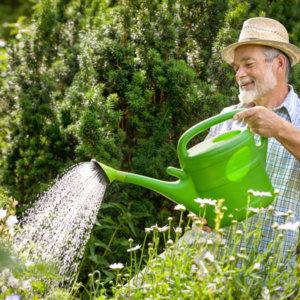 Кальцієва селітра (кальцій азотнокислий) від гниття овочів та фруктів, для саду та городу