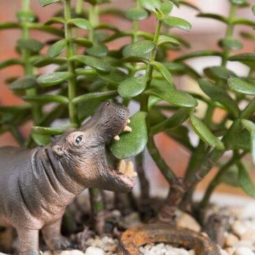Сульфат магнію для догляду за рослинами